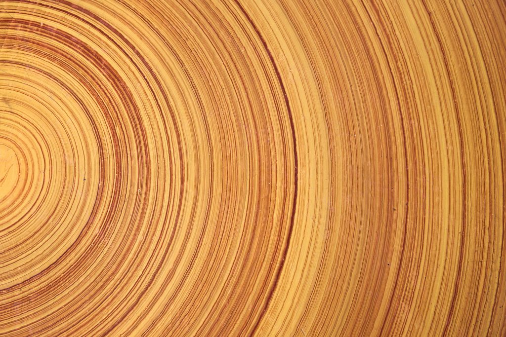 tree ring close up